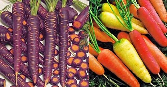 цвет моркови